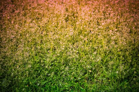 Flowers meadow in natural light, Backgrounds