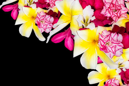 Colorful of flowers isolated on black, Background Banco de Imagens