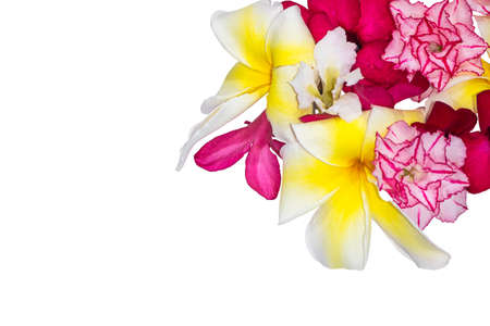 Colorful of flowers isolated on white, Background