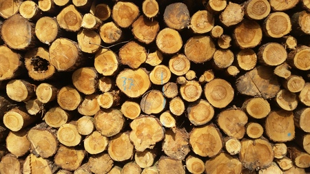 wood trade: Timber industry