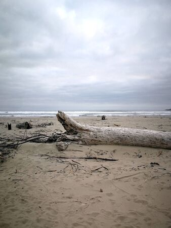 Wood on the Oregon sea with cloudy sky