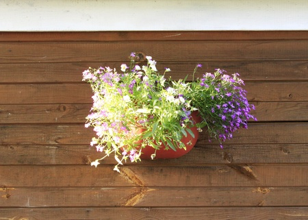 planter: Wall planter  Stock Photo