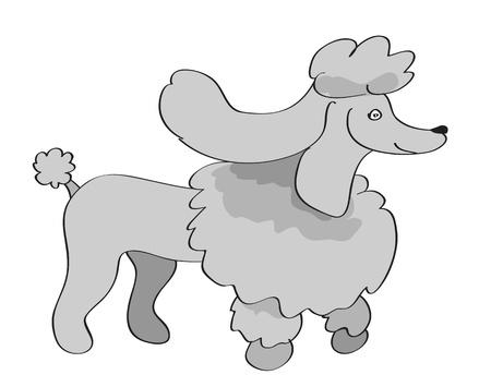 Poodle Dog Vector Illustration  Illustration
