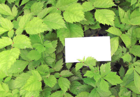 green leaves with empty card Stock Photo - 13709125