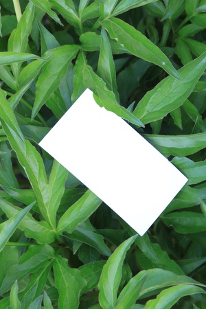 green leaves with empty card Stock Photo - 13709109
