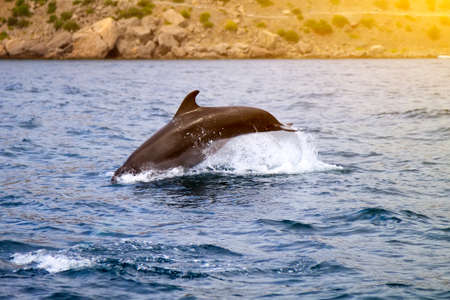 bottlenose dolphin in its natural habitat. representative of whale floating in sea Foto de archivo