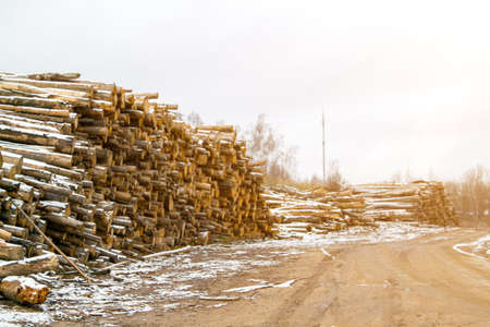 felled logs of trees lie by the road powdered with snow in late autumn
