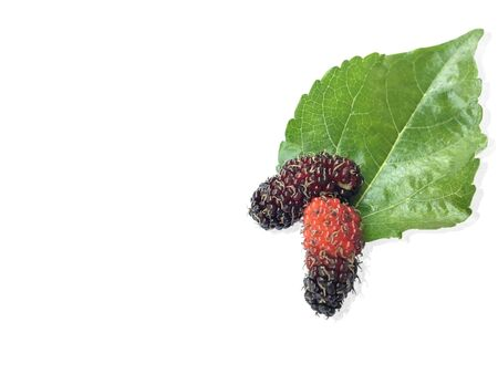 Ripe Red Mulberry With Green Mulberry Leaves On Pure White Background