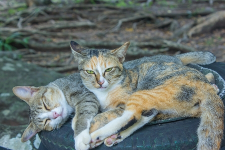 Two cats at the animal s natural habitat is cute  photo