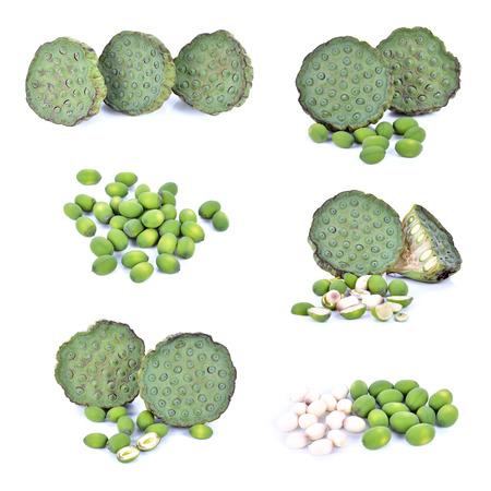 seedpod: Freshness Lotus seed and pod Stock Photo