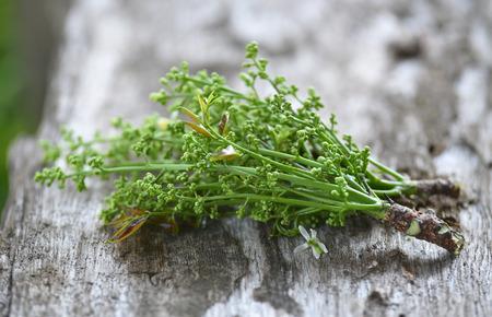 neem: Fresh and green Neem plant (Azadirachta indica) on wood background