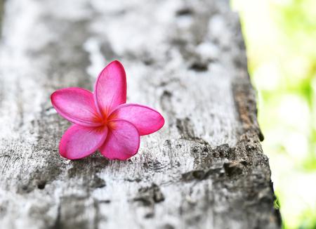 tahitian: pink plumeria on the wood background Stock Photo