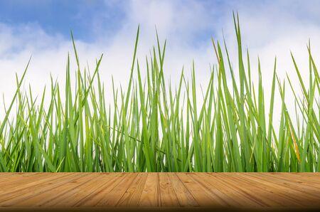 field and sky: Tabl�n de madera en natural, campo de hierba verde y el cielo de fondo - se puede utilizar para la visualizaci�n de montaje o sus productos
