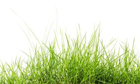 白い背景で隔離の緑の草 写真素材