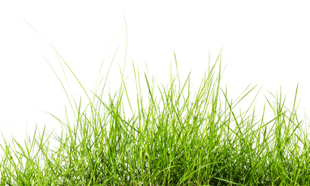 horizontal  green: Green grass isolated on white background