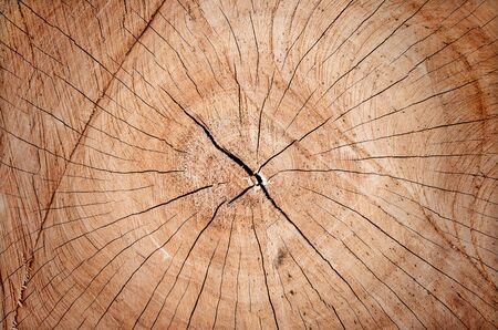 tree texture: cracked wood board timber,Wooden wall background or texture