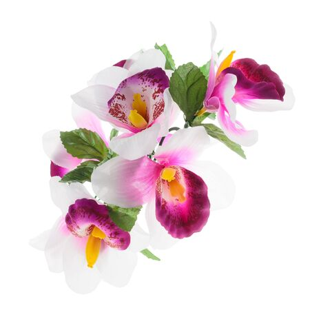 soft colors: Flower, orchid flower print in soft colors made from fabric.