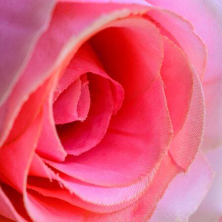 fake: Fake plastic rose Stock Photo