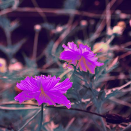 retro multicolor flower bouquet for background Stock fotó