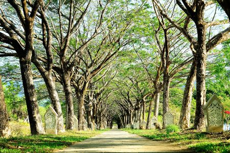 park path: The Piblic Park in Langkawi, Malasia