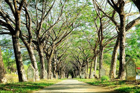 woodland path: The Piblic Park in Langkawi, Malasia