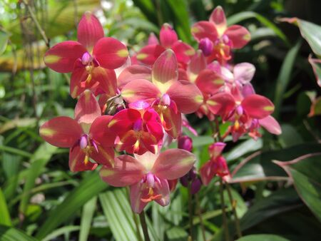 pretty orchids photo