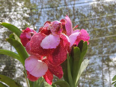 color fresh orchids photo