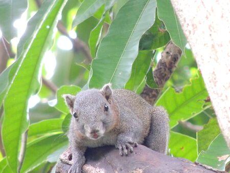 squirrel  Stock Photo