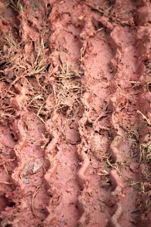 wheel trace on mud back ground is born it rains Stock Photo - 16703518
