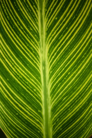 Texture of a green leaf as background Stockfoto