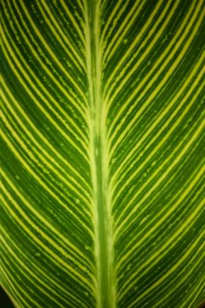 Trama di una foglia verde come sfondo