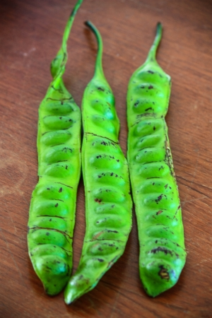 Close up of Parkia speciosa - Bean from southern of Thailand photo