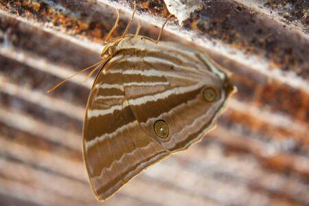Una bellissima farfalla monarca.