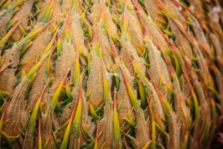 palm garden: Palm garden la Huerta del Cura in Elche