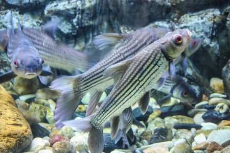 Colorful aquarium, showing different colorful fishes swimming Stock Photo - 21324807