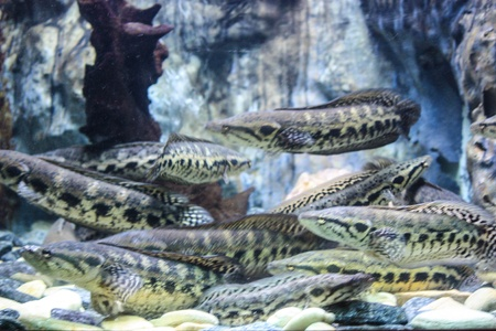 Colorful aquarium, showing different colorful fishes swimming Stock Photo - 21324904