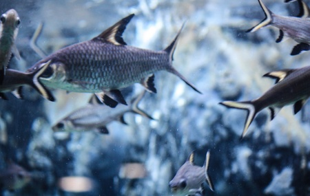 sea life centre: Colorful aquarium, showing different colorful fishes swimming Stock Photo