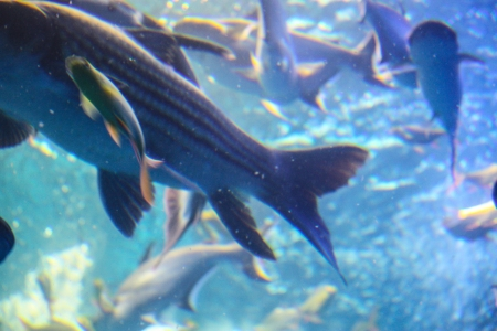 Colorful aquarium, showing different colorful fishes swimming Stock Photo - 21332838