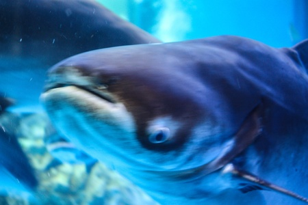 Colorful aquarium, showing different colorful fishes swimming Stock Photo - 21332839