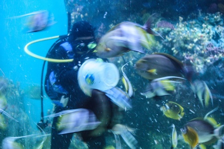 Colorful aquarium, showing different colorful fishes swimming Stock Photo - 21332872
