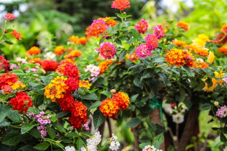Many small, colorful flowers bloom beautifully Stock Photo