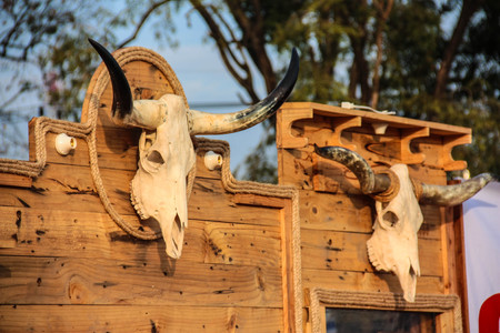 Skull of a steer warns trespassers of their likely fate