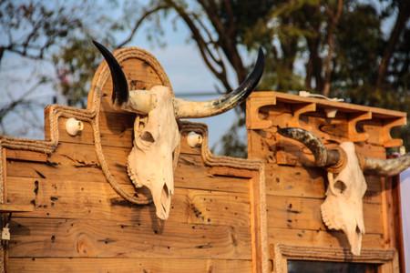 Cranio di un manzo avverte trasgressori del loro probabile destino