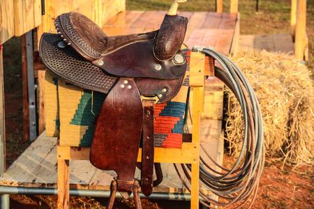 Close-up of a dressage horses head