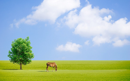 Tree Grassy sun sky horse and sheep of Earth day Ecology concept Stock Photo