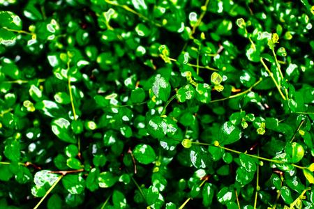 fallen: Green leaf pattern fallen leaves background image Stock Photo