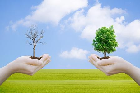 Concepto de ecología Manos humanas que sostienen la gran planta con borrosa Día Mundial del Medio Ambiente Foto de archivo - 79012431