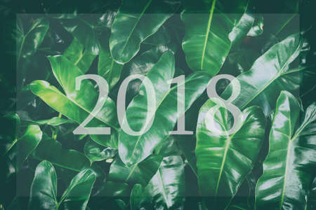 red clover: Leaf background Happy for 2018 new year