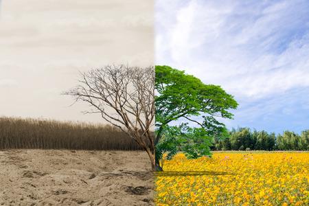 생태 개념 tree forest 가뭄과 숲 상쾌 스톡 콘텐츠