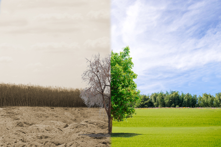 Ecology concept tree forest drought and forest refreshing